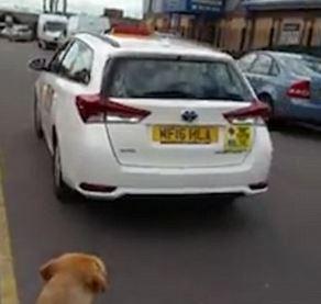 Muslimský taxikář odmítl naložit nevidomého. Vadil mu slepecký pes