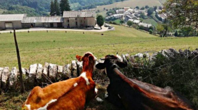 Italská vesnice má 7 obyvatel. A také 80 migrantů